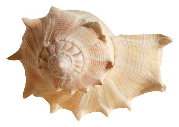 Ocean Treasures (114).png