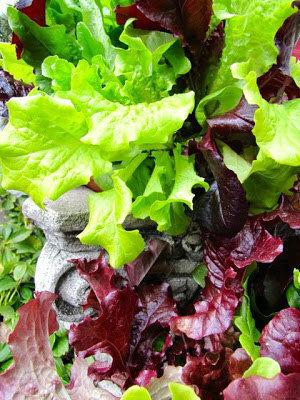 Заправка салатная для зелени и салатов