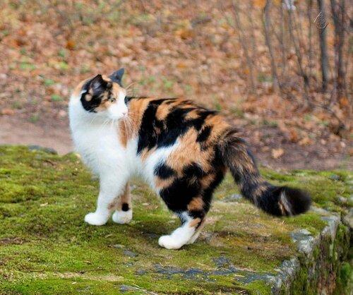 Кокетливая кошка
