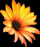 thaliris_flowers_el10.png
