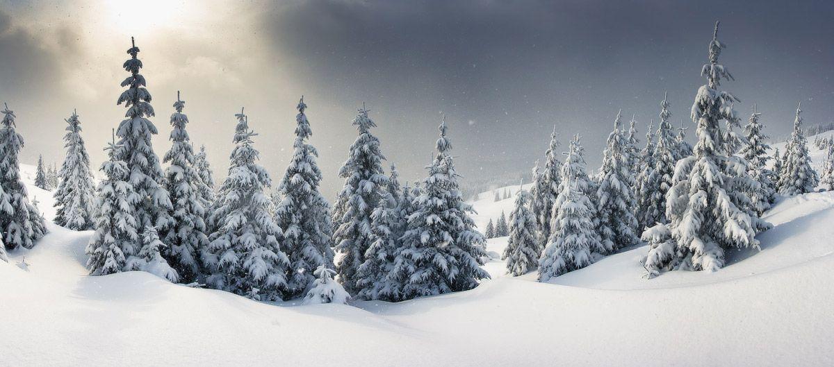 Леонид Тит: природа удивительна! (24 фото)
