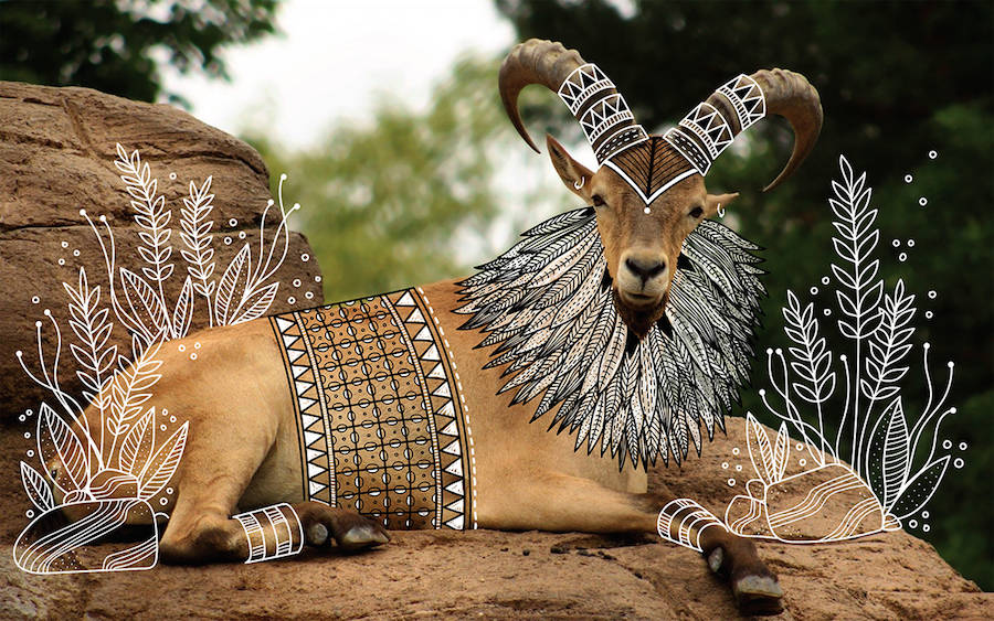 Wild Animals with Funny Drawings of Costumes