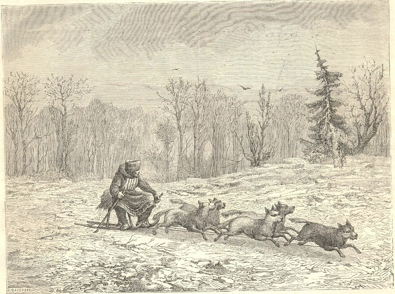 1862. Сибирь. Собачья упряжка