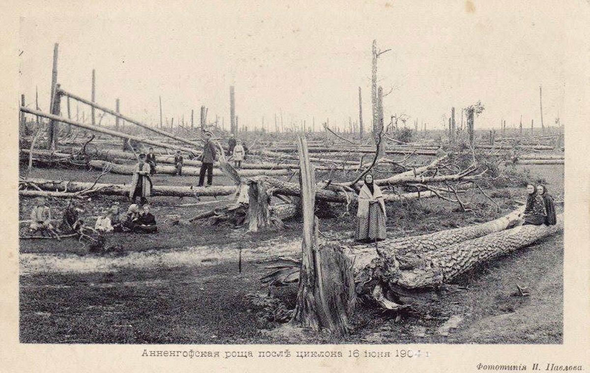 Последствия урагана 16 июня 1904 г. Анненгофская роща после циклона