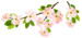 Spring_Branch_PNG_Clipart_Picture.png