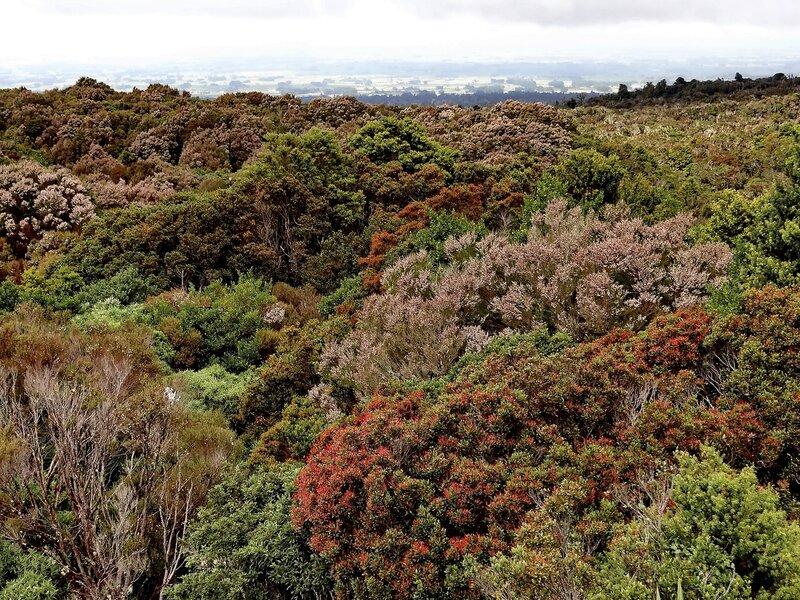 Лес у подножия вулкана Таранаки