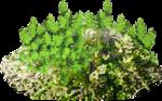 Flora ClipArt 133.png