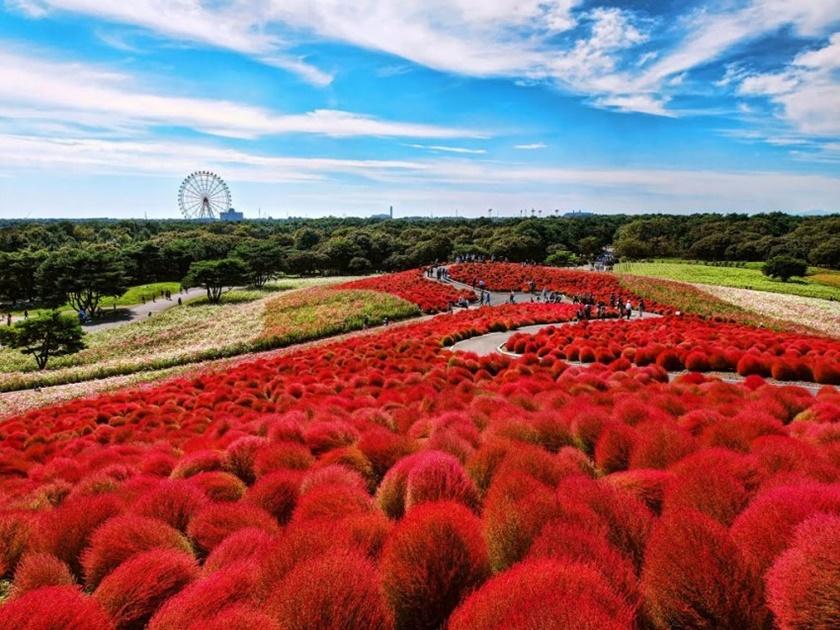 Живописный японский парк Хитати Кайхин 0 1422c3 11b5557 orig