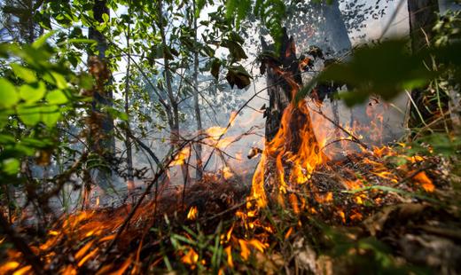 ВГеленджике зажегся лес