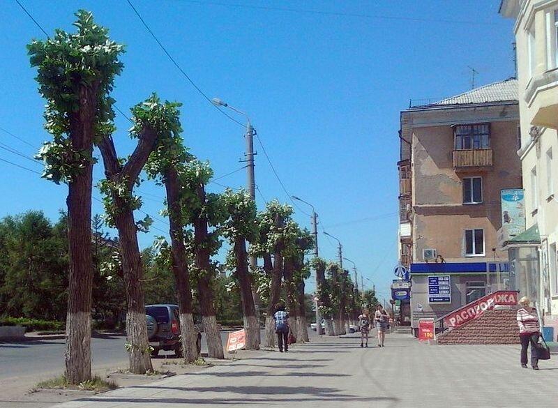 Тополя на Проспекте Мира