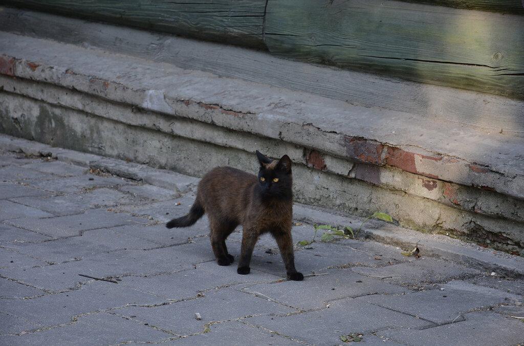 Коты с пер. Пушкина. Гомель