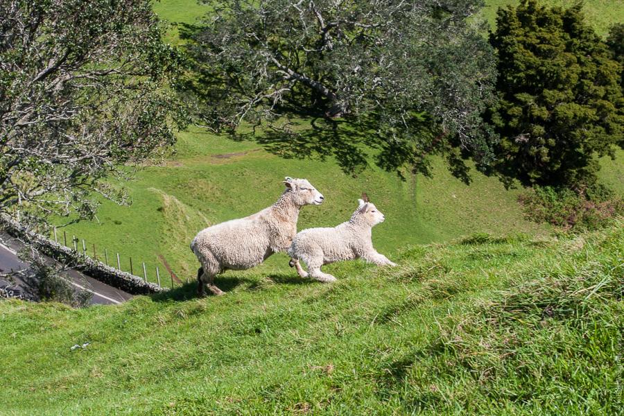 Cornwall park и one tree hill domain
