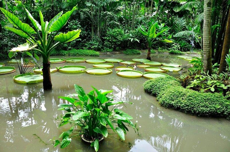 фото тенелюбивых садов сингапура это