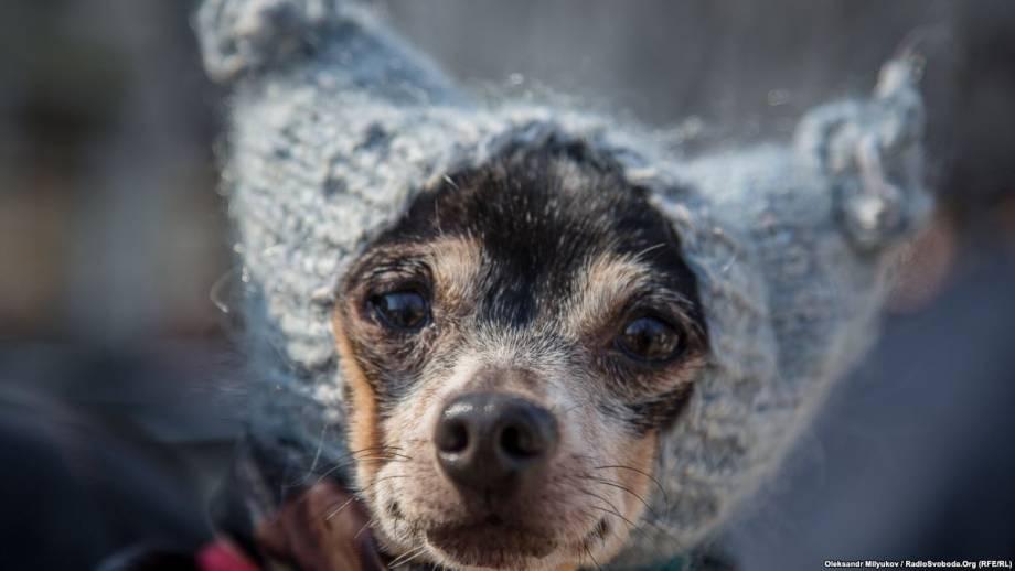 Фоторепортаж: Первый одесский Марш спасенных собак