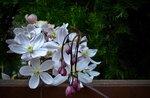 Цветущий март