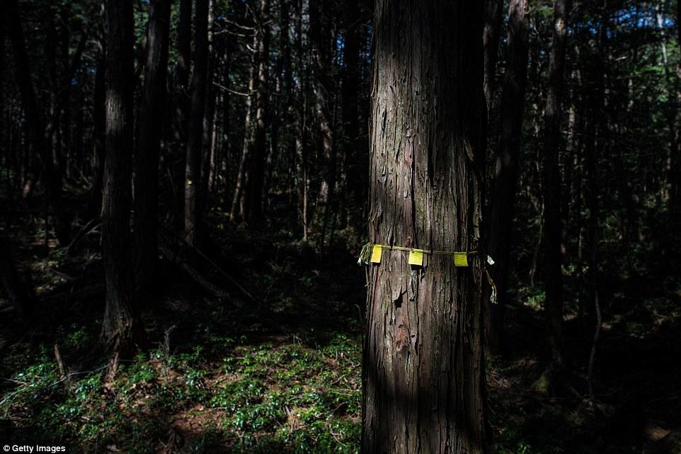 Мрачный японский лес для самоубийц