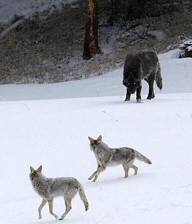 животные мир природа редкие явления существа