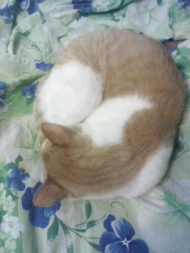 Феликс спит и видит...