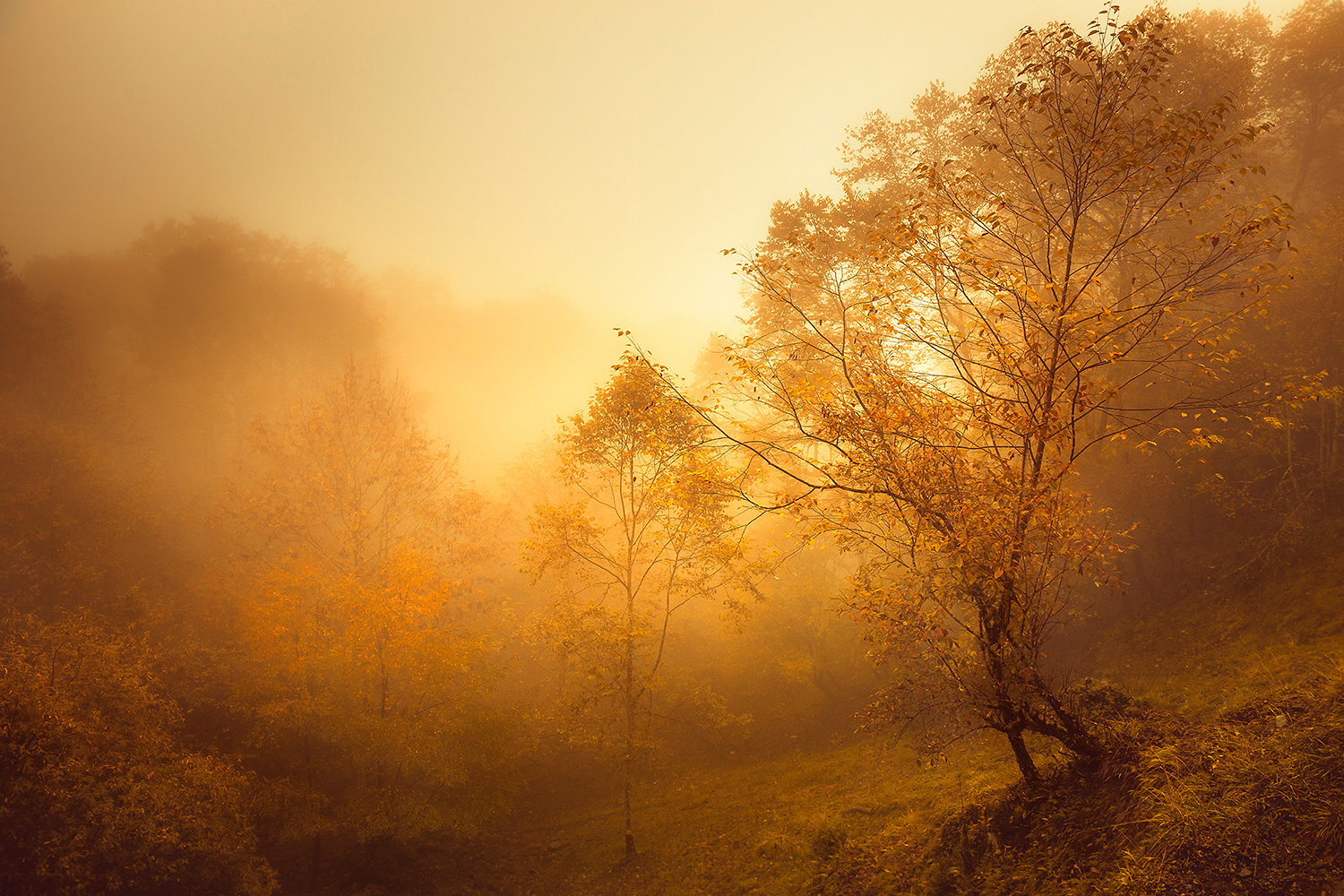 Captivating Images of Different Seasons Worldwide