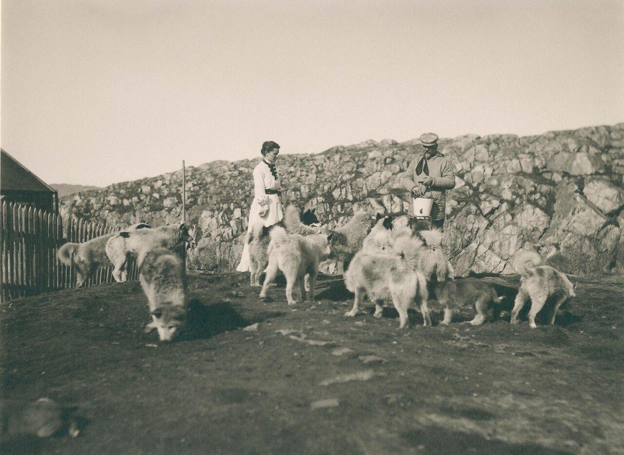 1889-1909. Аасиаат. Кормление собак