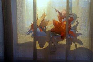 Мое окно