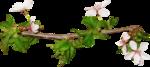 Holliewood_SpringFaeries_Branch10.png