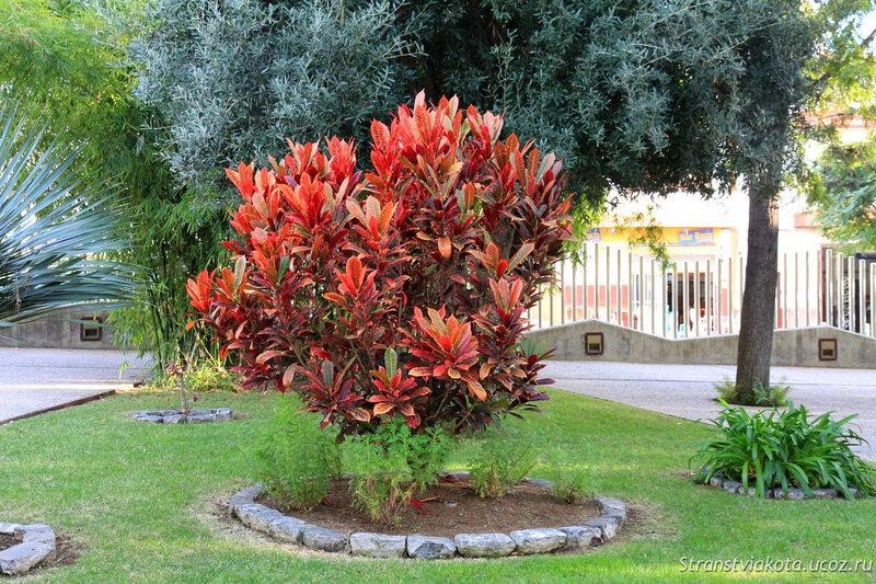 Ла Пальма, Ботанический сад в Лос Льянос
