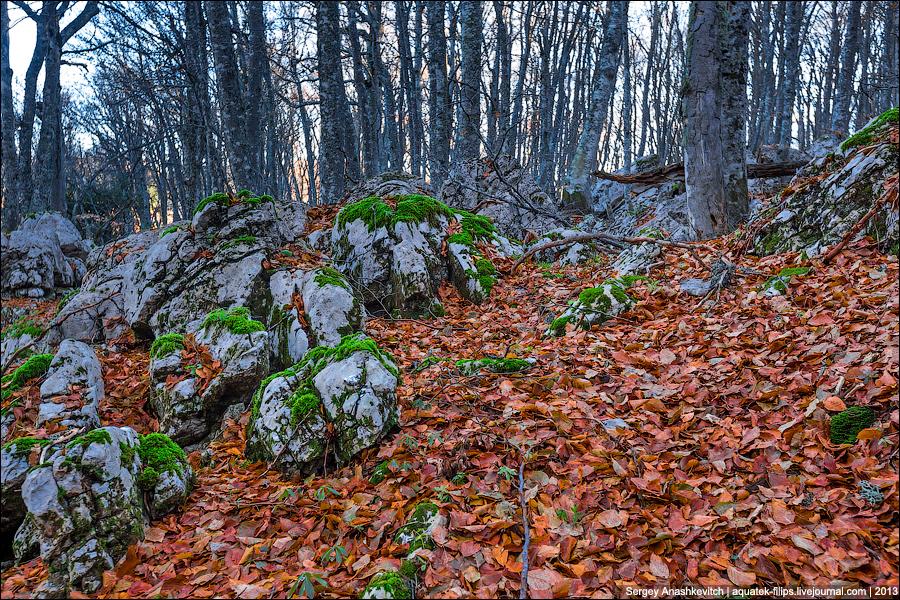 Осень на Ай-Петри