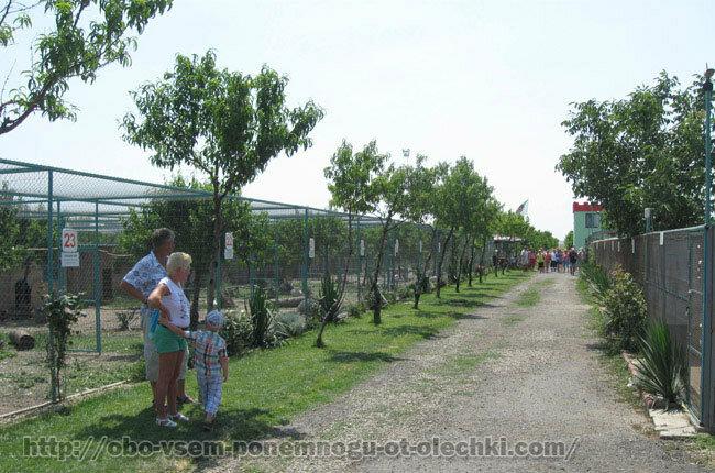 На ферме павлинов