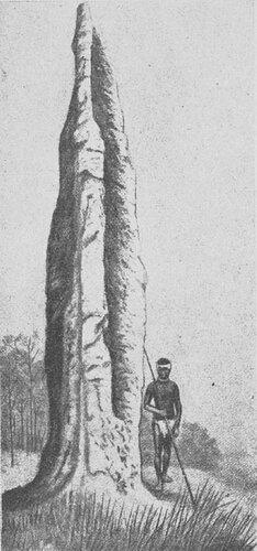 Гнезда термитов в Австралии