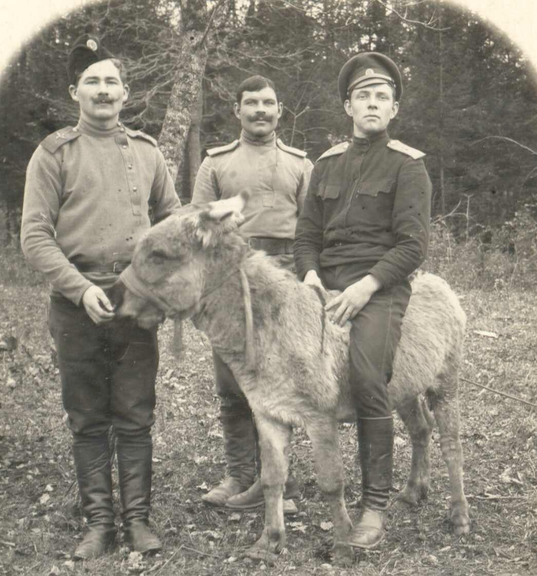 1916. Русские авиаторы с осликом