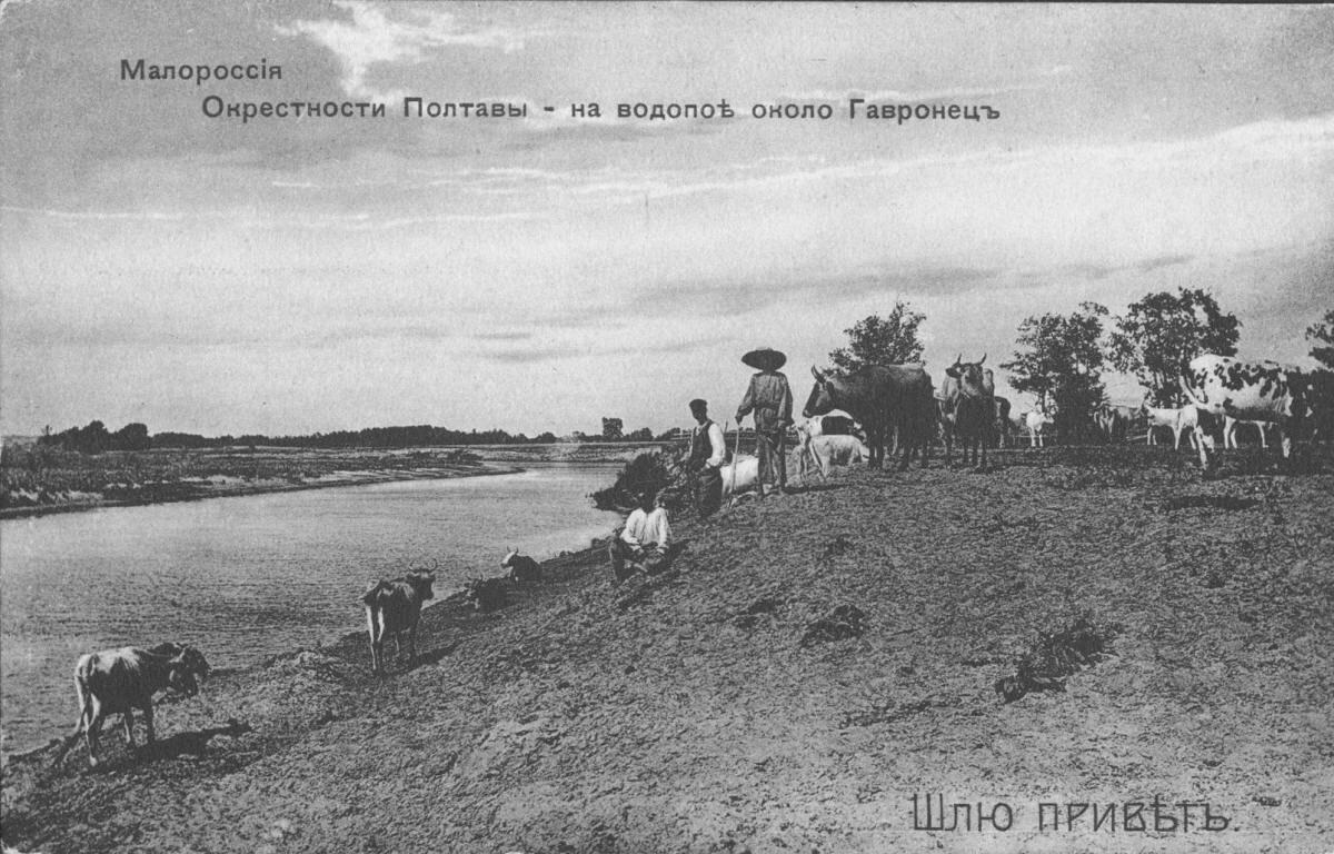 Село Гавронцы. На водопое