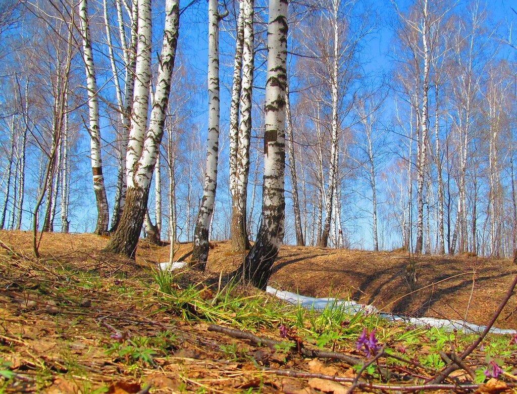 Я иду в лесу весною, Надо мною – синева… Подо мною плотным слоем Прошлогодняя листва. Хоть пригорок и оттаял, Но в тени лежит снежок, И на шаг не отступая, Рядом с ним растет цветок… (Е. Стюарт)