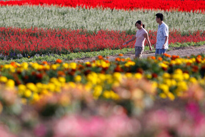Япония организовала выдачу «сертификатов любви»
