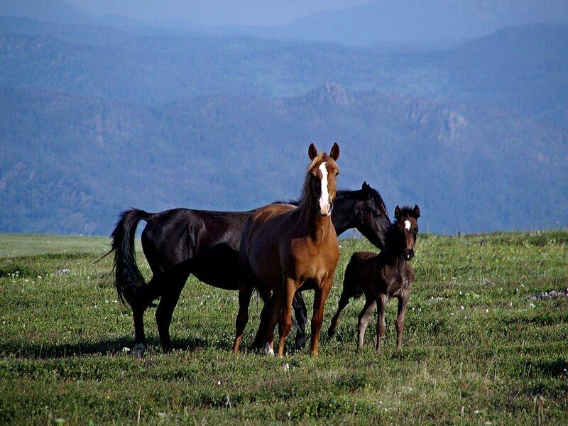 2014 - год лошади, год семьи