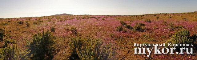 Цветущая пустыня фото