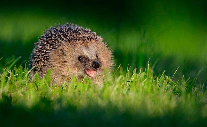 Фото «Животные улыбайки»