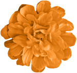 S2SS_TTSOOL_Flower.png