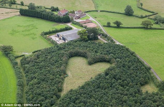 Сердце среди дубов. Необычное признание в вечной любви
