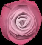 KAagard_Kisses_Flower6.png