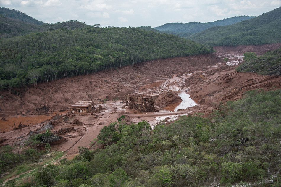 3. По деревьям можно увидеть, до какого уровня доходила токсичная грязь.