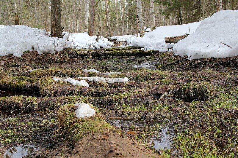 Заросшие брёвна в русле лесного ручейка в Порошино между снежными берегами в марте