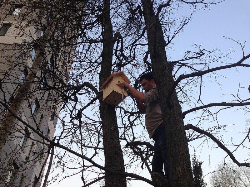 Вешаем скворечник на дерево