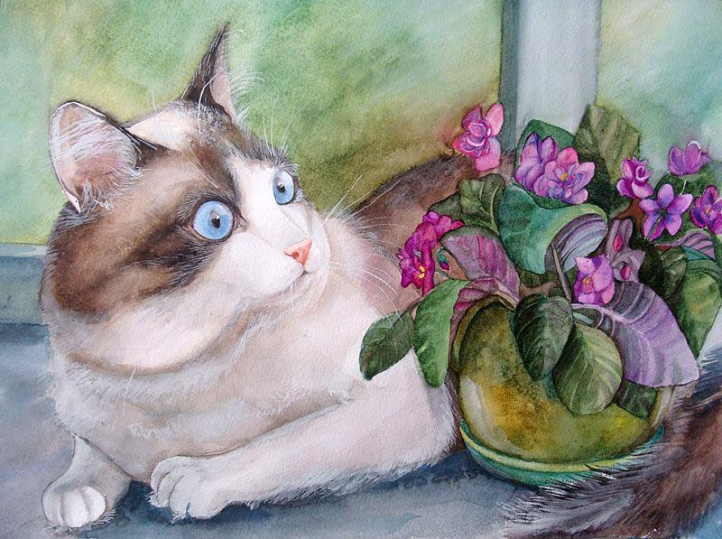 Кошка с голубыми глазами..jpg