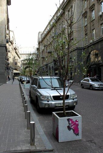 Молодые деревья в Пассаже