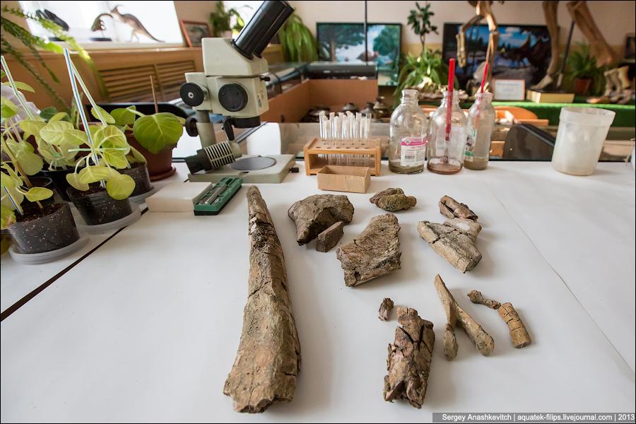 Там, где реставрируют динозавров