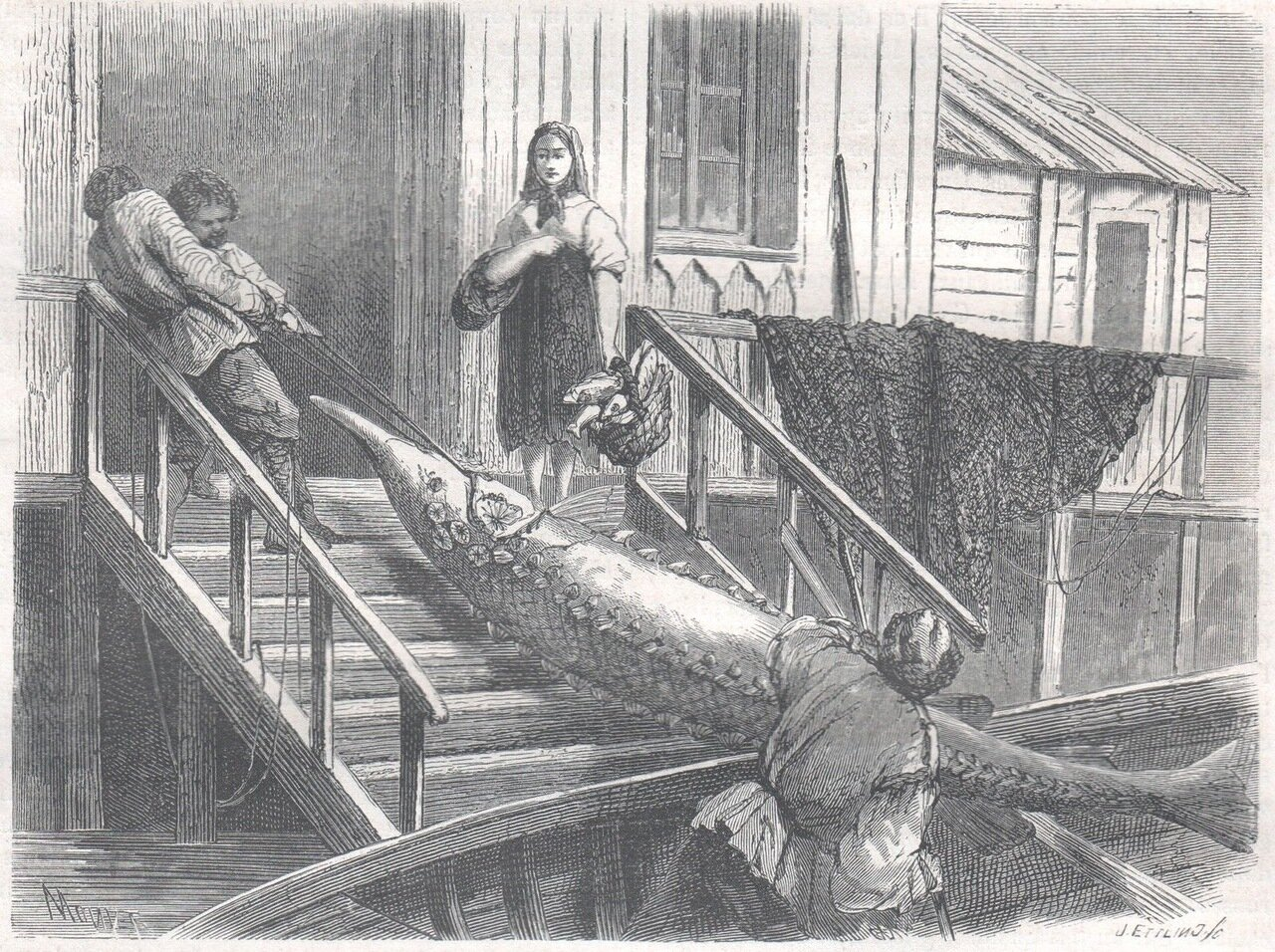 1867. Огромный осетр, выловленный в Волге