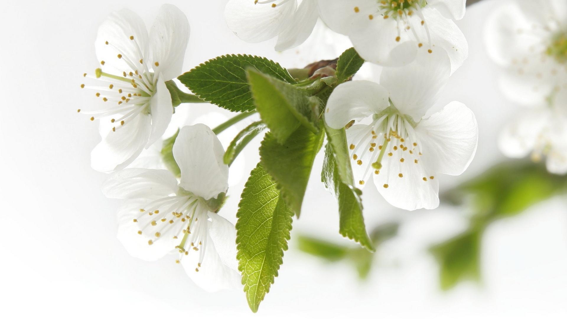 Красивые обои на рабочий стол Весна: большая подборка