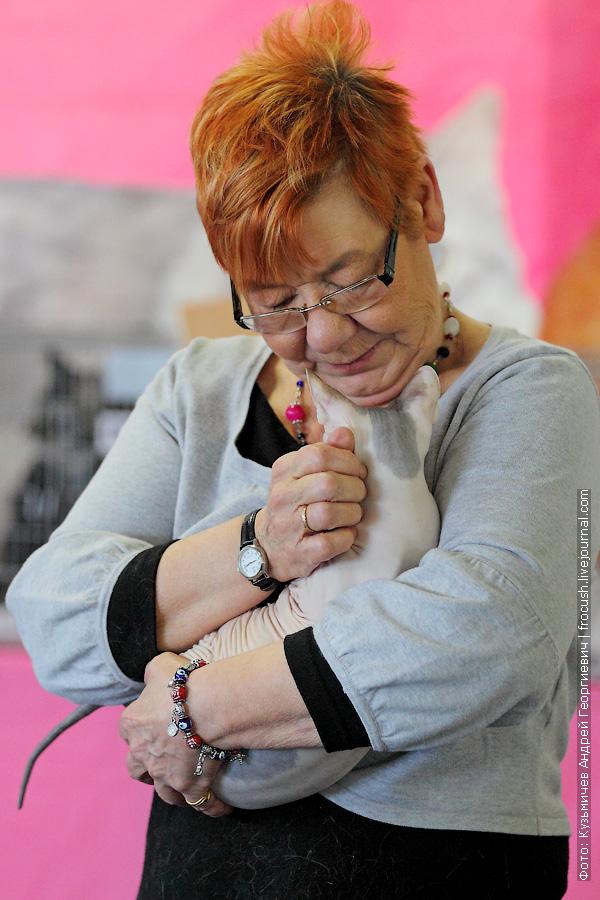Донской сфинкс выставка кошек