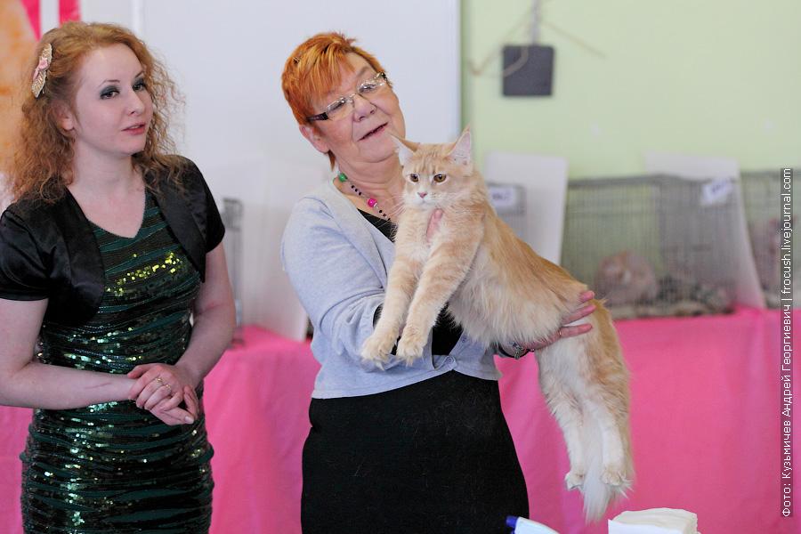 Мейн-кун Кошка выставка